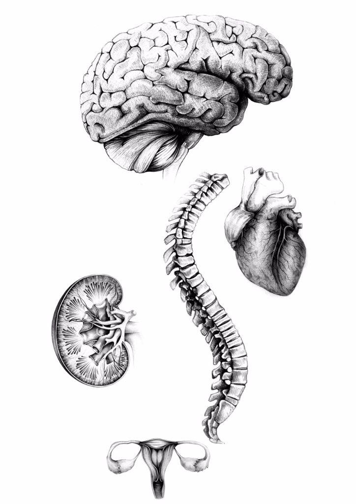 Andreas-derebucha_-Anatomische-Zeichnung